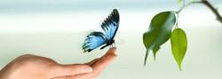 "papillon ""art du toucher"""